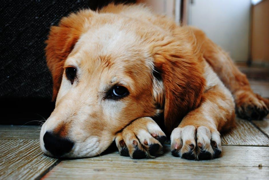 5 inmejorables obsequios para tu perro